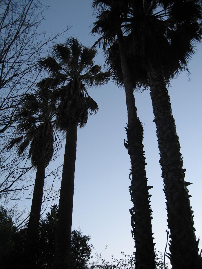 Palms_2